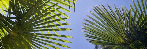 Curso às palmeiras Imagens de Stock Royalty Free