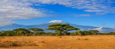 Curso África de Tanzânia Kenya da montanha de Kilimanjaro Imagens de Stock