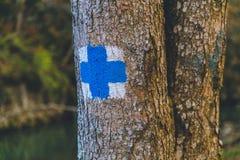 Curso azul do sinal das árvores de floresta do outono Fotos de Stock