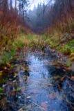 Curso de agua en madera en otoño Foto de archivo libre de regalías
