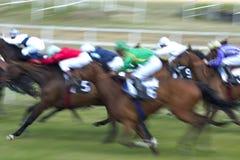 curso de chevaux Imagem de Stock Royalty Free