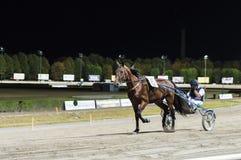 Curso de corrida de cavalos da noite Imagem de Stock