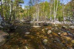 Curso de Golo River a través del bosque de Valdo-Nielo en la isla de Córcega Fotos de archivo libres de regalías