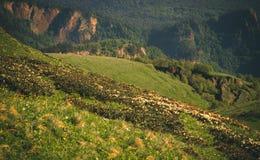 Curso do verão da paisagem das montanhas Fotografia de Stock