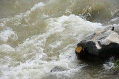 Curso rápido de un río de la montaña imagenes de archivo