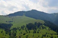 Curso a Romênia: Os montes verdes em Bucovina fotografia de stock