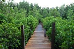 Curso surpreendente na ponte bonita no verde da natureza Imagens de Stock