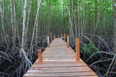 Curso surpreendente na ponte marrom bonita no verde da natureza Foto de Stock Royalty Free