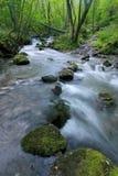 Cursus van de rivier van Col. van Iraty Stock Afbeeldingen