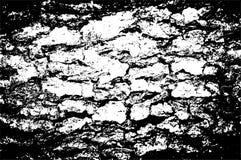 curt szczekać drzewa tekstury wektora Zdjęcie Stock