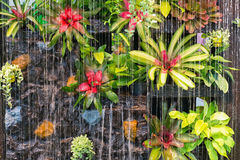 Curtain of interior waterfall. / fountain decorated with colorful plants and ferns on rock wall Royalty Free Stock Photography