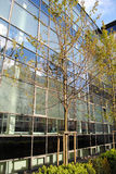 Curtain wall. Glass curtain-wall with tress in front Stock Photo