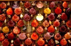 Curtaine van kleurenshells Stock Foto's