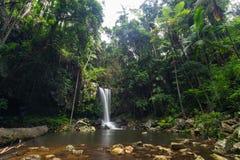 Curtis Falls en parc national de Tamborine de bâti sur la Gold Coast images stock
