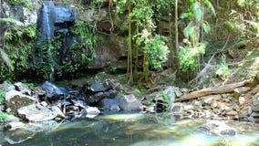 Curtis Falls Gold Coast Australia stock footage