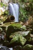 Curtis Falls i monteringen Tamborine Royaltyfri Bild