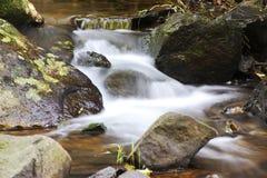 Curtis Falls im Berg Tamborine Stockbild
