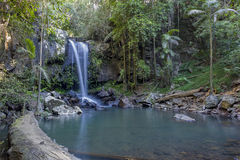 Curtis Falls. Located at Mount Tamborine in Queensland Australia, it is supplied by Cedar Creek Stock Photos