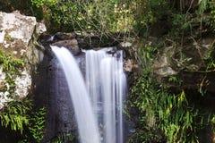 Curtis Falls in Mount Tamborine Stock Photos