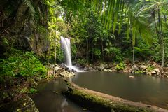 Curtis Falls in Mount Tamborine National Park on the Gold Coast royalty free stock images
