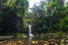 Curtis Falls in Mount Tamborine National Park on the Gold Coast stock images