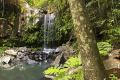 Curtis Falls Waterfall in Mount Tambourine Royalty Free Stock Photos