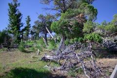 Curto circuito inoperante da árvore no parque nacional de Yellowstone imagens de stock royalty free
