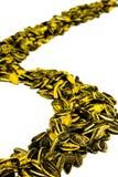 Curva ad S del seme di girasole Fotografia Stock Libera da Diritti