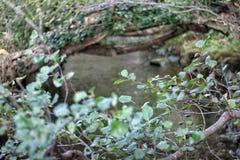 Curva da árvore Foto de Stock