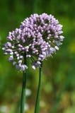 Curva da flor Fotografia de Stock Royalty Free