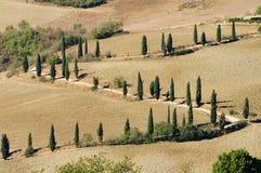 Curva de Cypress en caída Imágenes de archivo libres de regalías