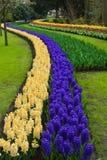 Curva de Hacyth, Lisse, Países Baixos fotografia de stock royalty free