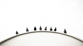 Curva de palomas Fotos de archivo