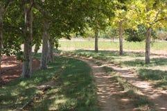 Curva de uma estrada rural com árvores imagem de stock