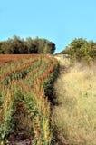 Curva del campo del Milo Fotografia Stock