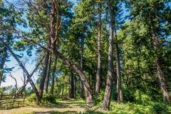 Curva dell'albero Fotografia Stock
