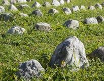 Curva delle rocce Fotografia Stock