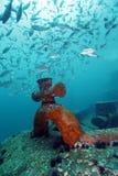 Curva do Shipwreck - escola da caranga de Yellowstripe Fotografia de Stock