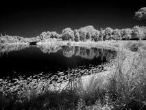 Curva doble del `de la naturaleza Foto de archivo libre de regalías