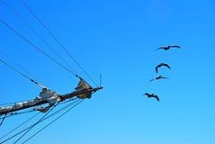 Curva e pelicanos do navio imagens de stock