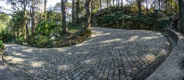 Curva pavimentada de la u-forma en el bosque Fotos de archivo