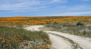 Curvar el camino de tierra lleva a través de Poppy Field anaranjada brillante debajo del cielo azul fotos de archivo libres de regalías