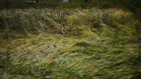 Curvas de lámina amarillas bajo impacto del viento almacen de metraje de vídeo