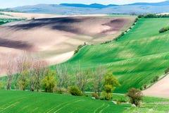 Curvas de la naturaleza Árbol blanco floreciente en campo verde de la primavera imagen de archivo libre de regalías