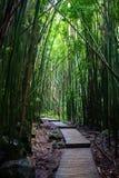 Curvas de madera del rastro del tablón a través del bosque de bambú imagenes de archivo