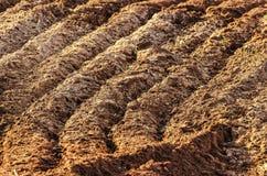 Curvas de uma terra arada Imagens de Stock