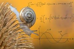 Curvas matemáticas en caracol en el fondo amarillo fotos de archivo