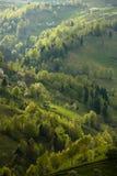 Curvas verdes Imagenes de archivo