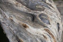 Curvas y remolinos en la corteza de la peladura imagen de archivo libre de regalías