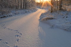 Curvatura da neve do nascer do sol do inverno do rio em uma floresta à vista dos raios do sol Imagens de Stock Royalty Free